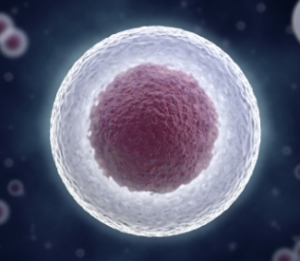 Stem Cells Overview