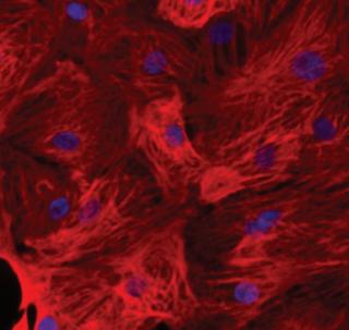 Human Stem Cells Research